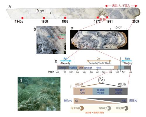 【研究論文】ツバルのサンゴが記録していたサンゴ礁劣化の歴史