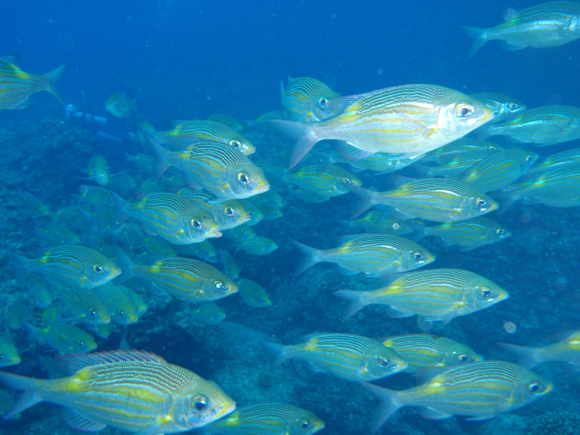 (キャプション)2050年には、海中に存在する魚とプラスチックごみが同じ重量になるという説も