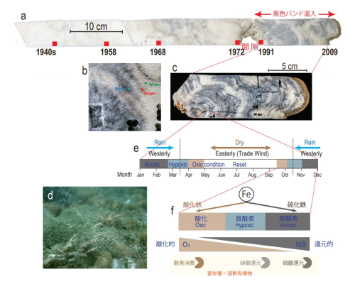 ツバルのサンゴが記録していたサンゴ礁劣化の歴史