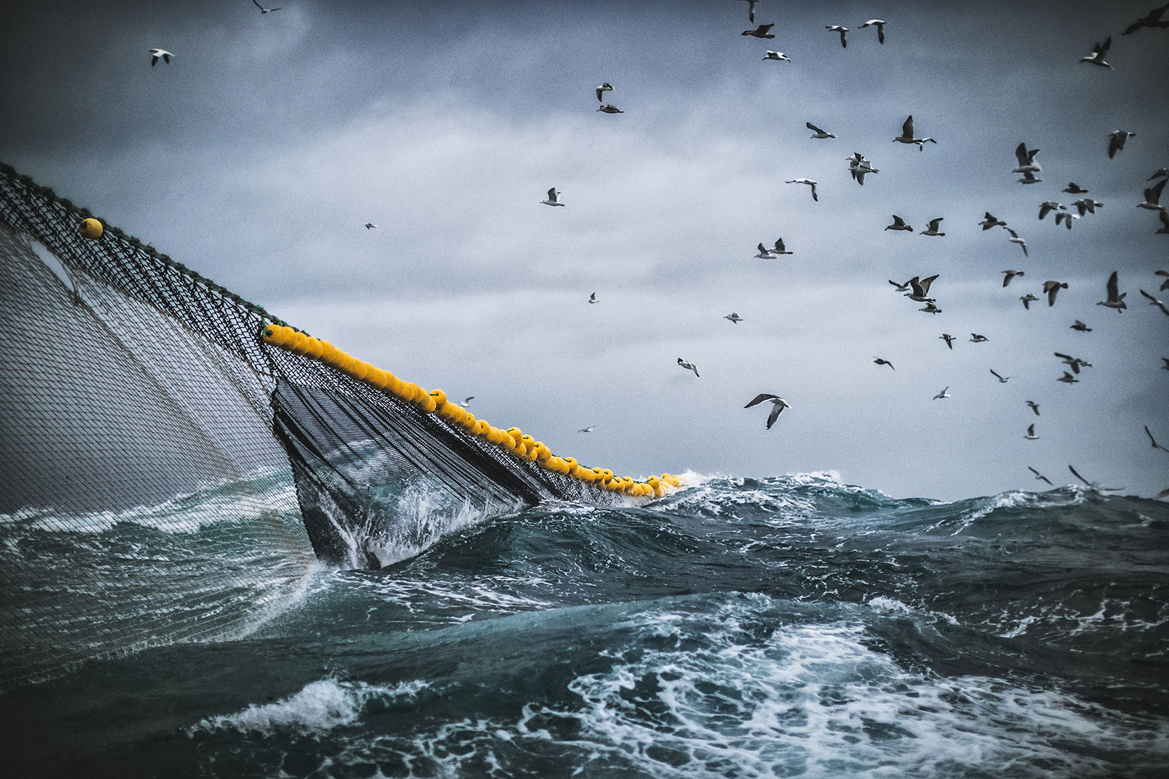 日本海の新たな脅威<br>−中国漁船による日本海の漁業資源破壊−