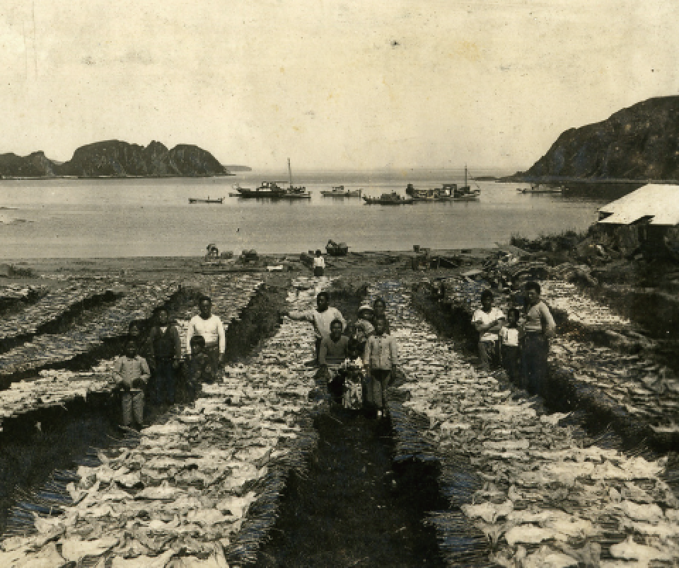 Workers drying codfish in the Shakotan Village are on Shikotan Island
