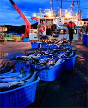 海洋資源の保全等の政策研究