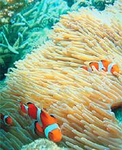 海洋生物多様性保全と利用の研究