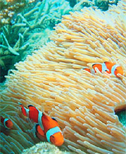 Research on Marine Biodiversity Conservation and Sustainable Use